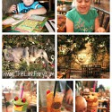 Rain Forrest Cafe Houston Review