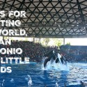 5 tips for visiting SeaWorld San Antonio with little ones #KidsTravelTexas #travel #MoreToSea #FamilyTravel